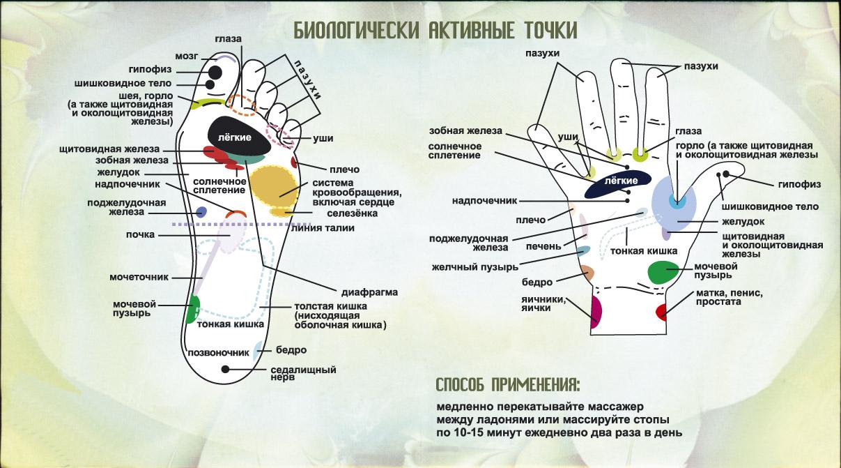 ezhik_2